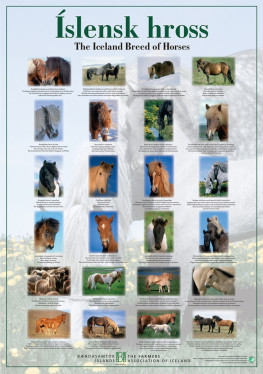 Poster The Icelandic Horse
